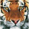 Вышивание Тигр (Tiger) на ткани,артикул:PN-0156010